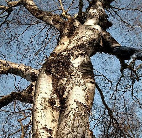 femme-arbre2.jpg
